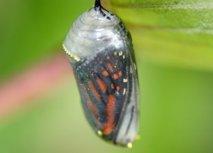 Le pouvoir du papillon