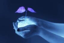 La paix, une plante très fragile