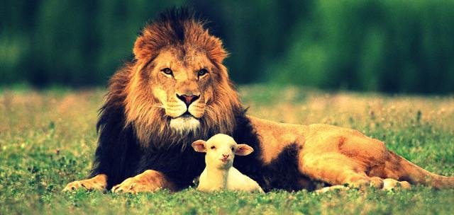 Une vision du lion et de l'agneau